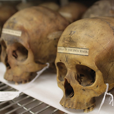 The Physical Anthropology Section's Collections at the Penn Museum.